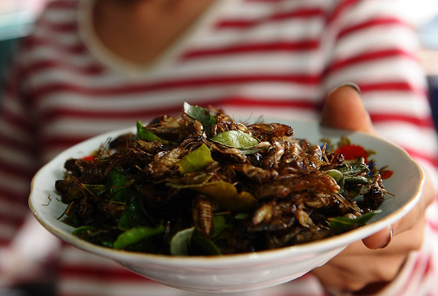 A vendor holds a plate of fried crickets in Laos.