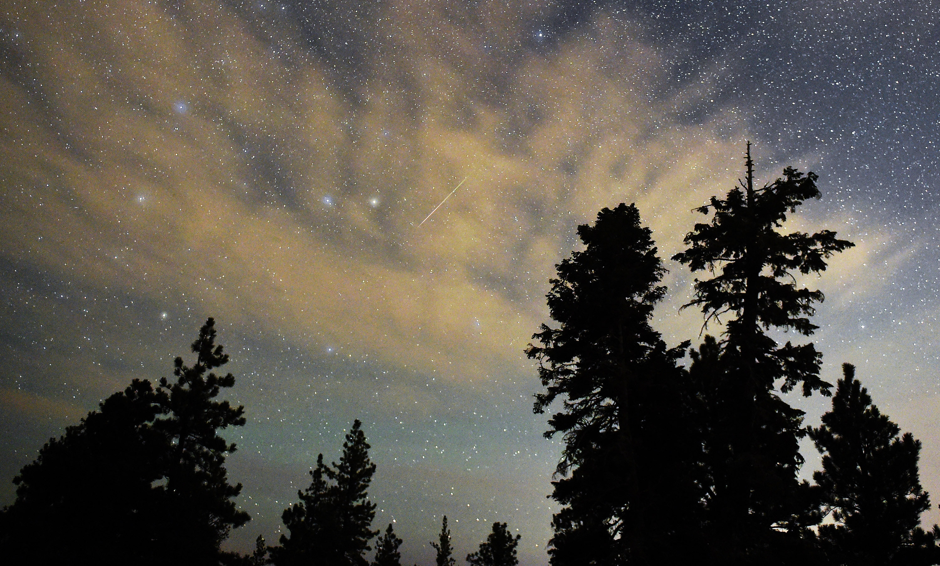 A Perseid meteor streaks across the sky above desert pine trees in the Spring Mountains National Recreation Area, Nevada.