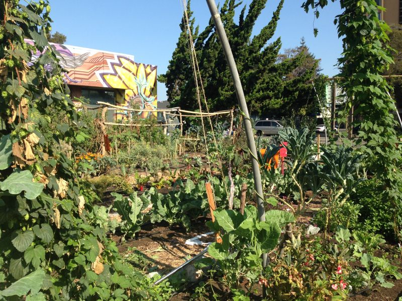 People's Grocery has offered West Oakland food justice programs, including this community garden. Ahmadi says the next obvious step, to him, was to open a full-service grocery store.