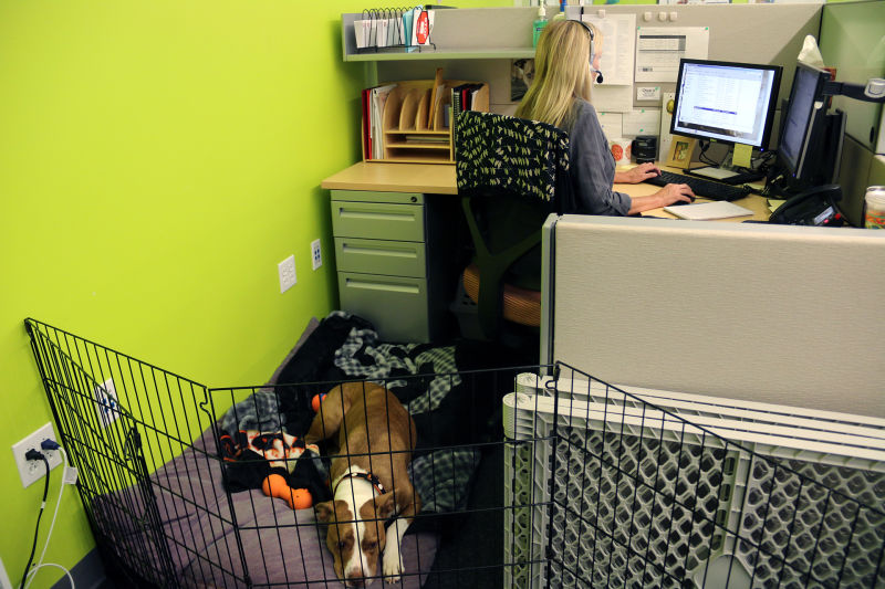 At the San Francisco SPCA's client contact center, operators field calls from owners facing pet surrender.