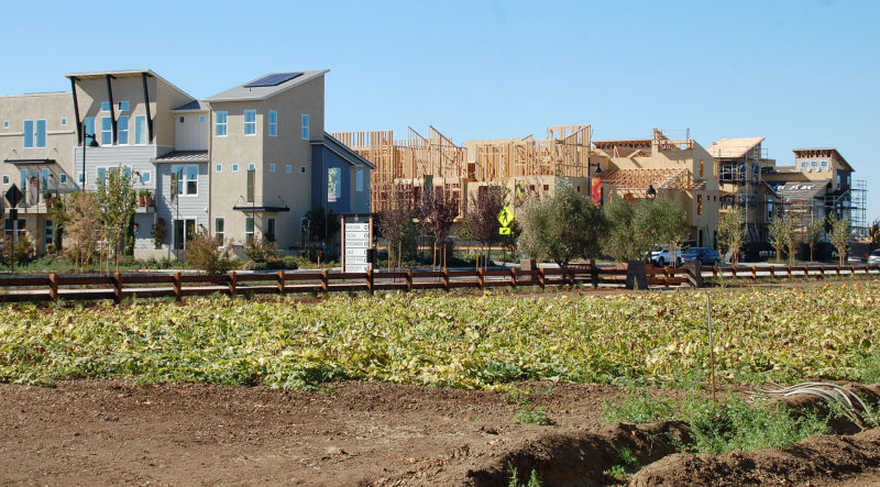 Homes being built alongside The Cannery's 7.5-acre farm.