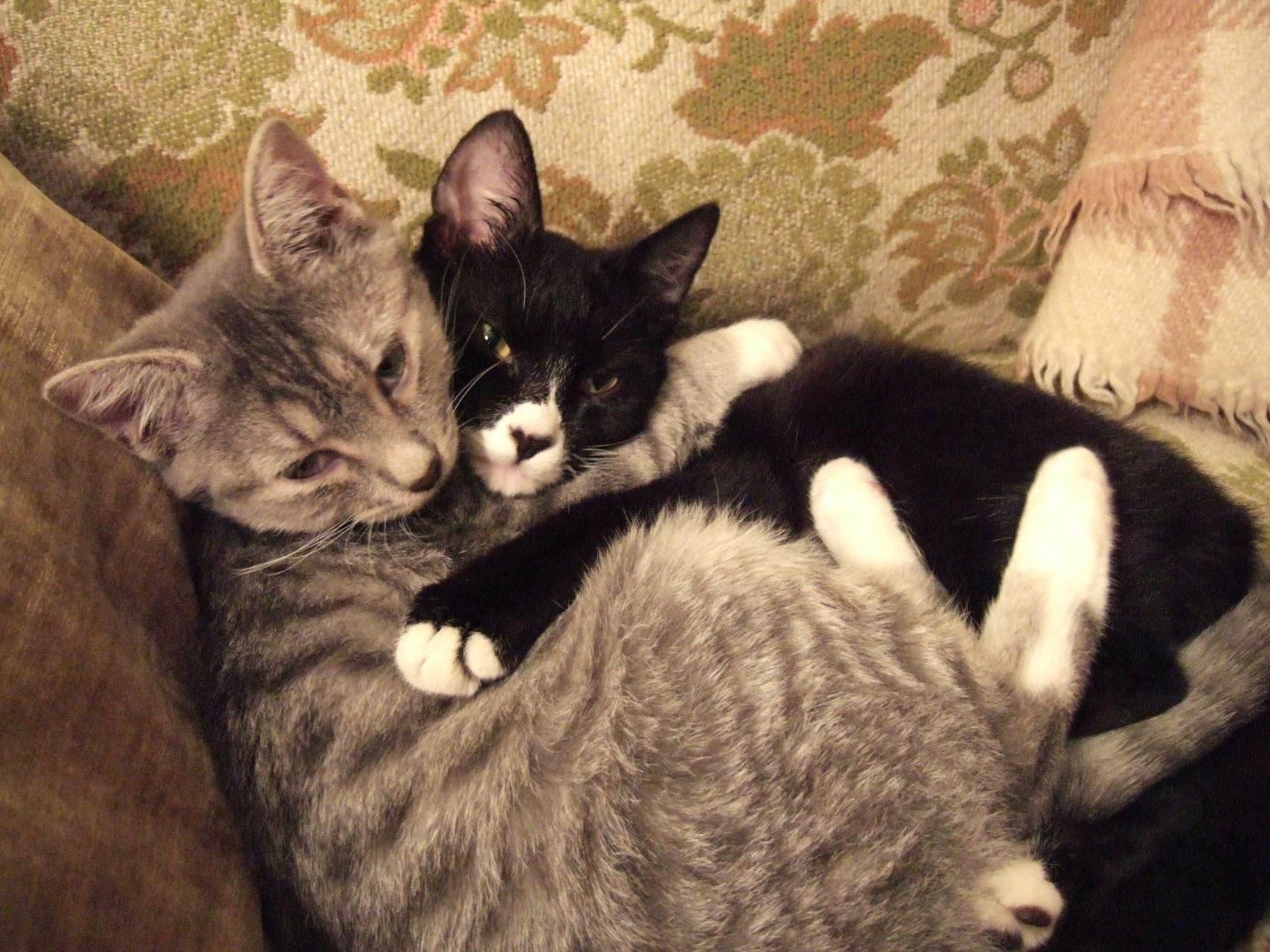 Friends forever! Science reporter Amy Standen's cats are besties.  Chris Colin/KQED