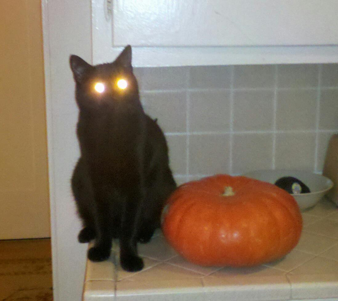 """Reporter April Dembosky's cat Lucas must be a Giants fan! This photo was taken in Oct 30, 2012, before Halloween and when the Giants were in the World Series – """"orange and black attack"""" was the team's tagline at the time."""
