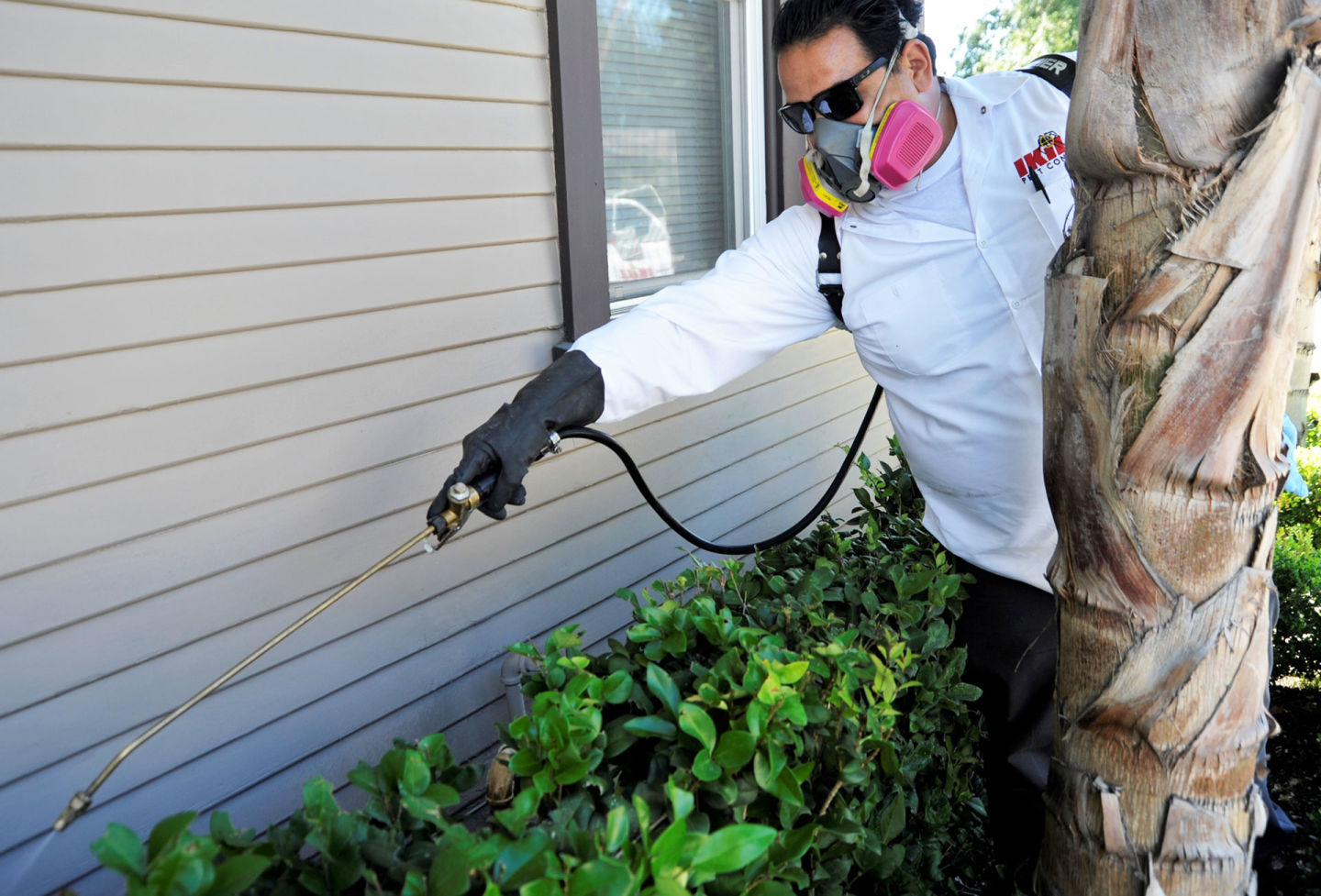 Carlos Rivera of IKILL Pests treats a home for American roaches in Pasadena.