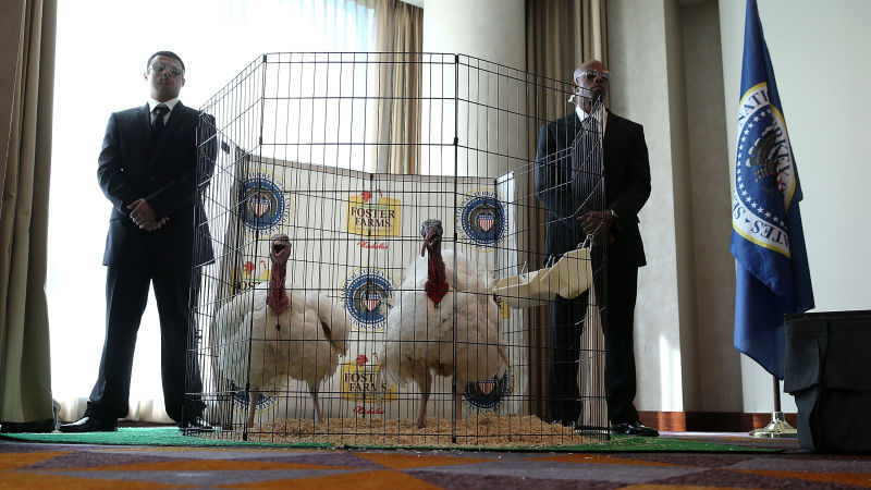 Men dressed as Secret Service agents stand guard next to Tom One and Tom Two, this year's turkey and alternate. Both are from an industrial turkey farm in Modesto.