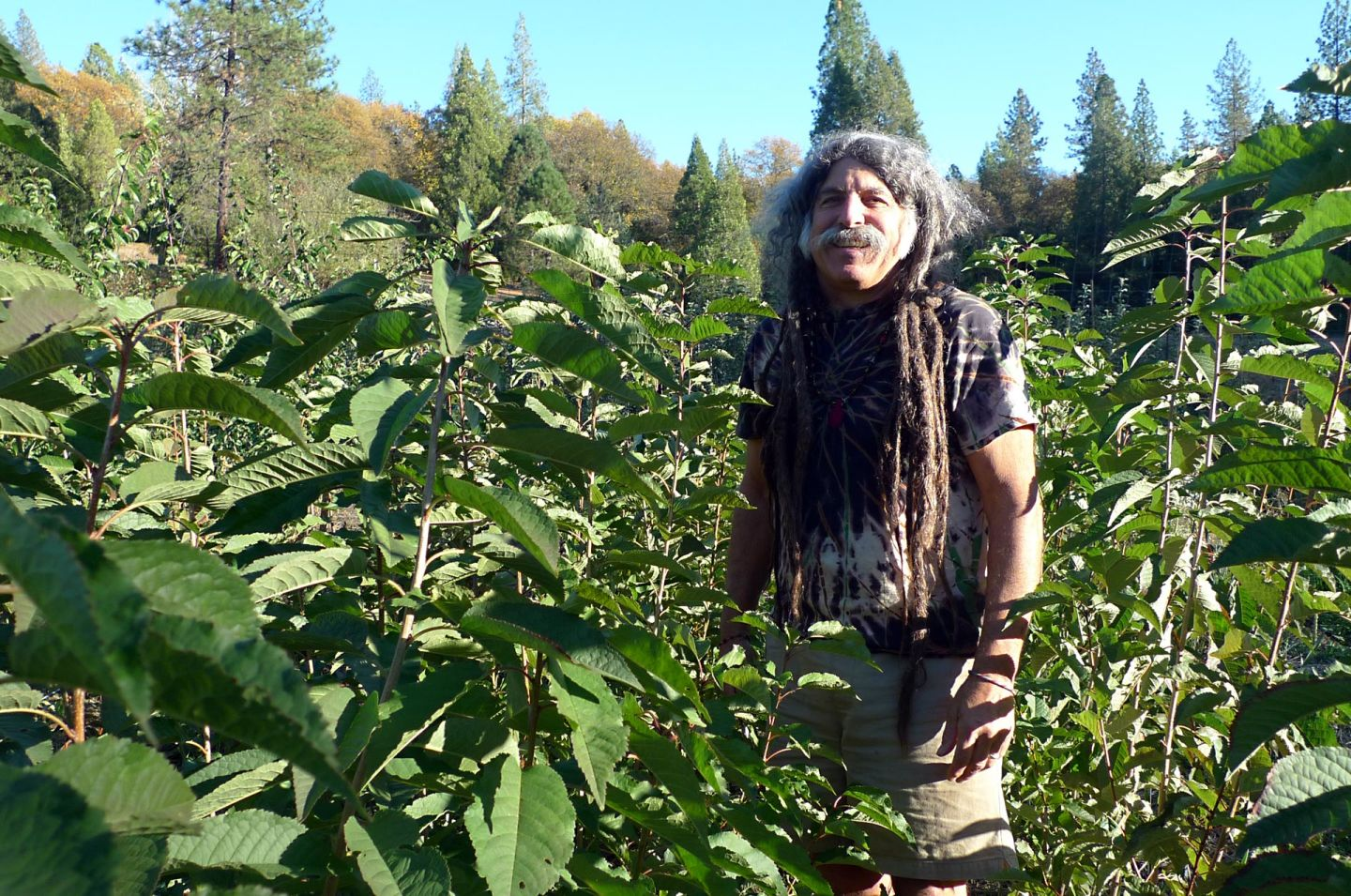 In his Nevada County nursery, Amigo Bob tends the plants he's propagated from heritage trees.