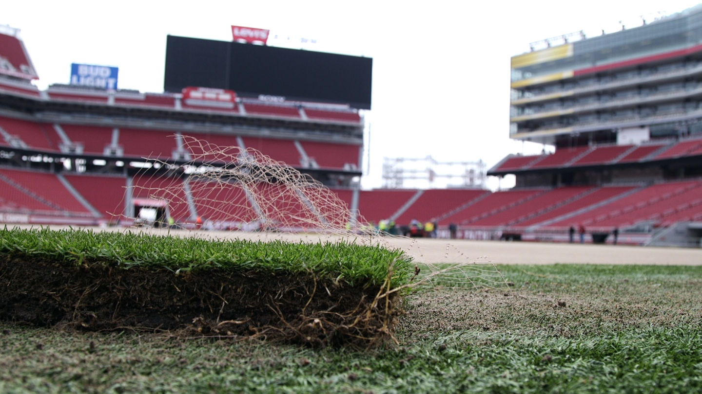 The lush Super Bowl sod is grown on top of plastic making for stronger roots.