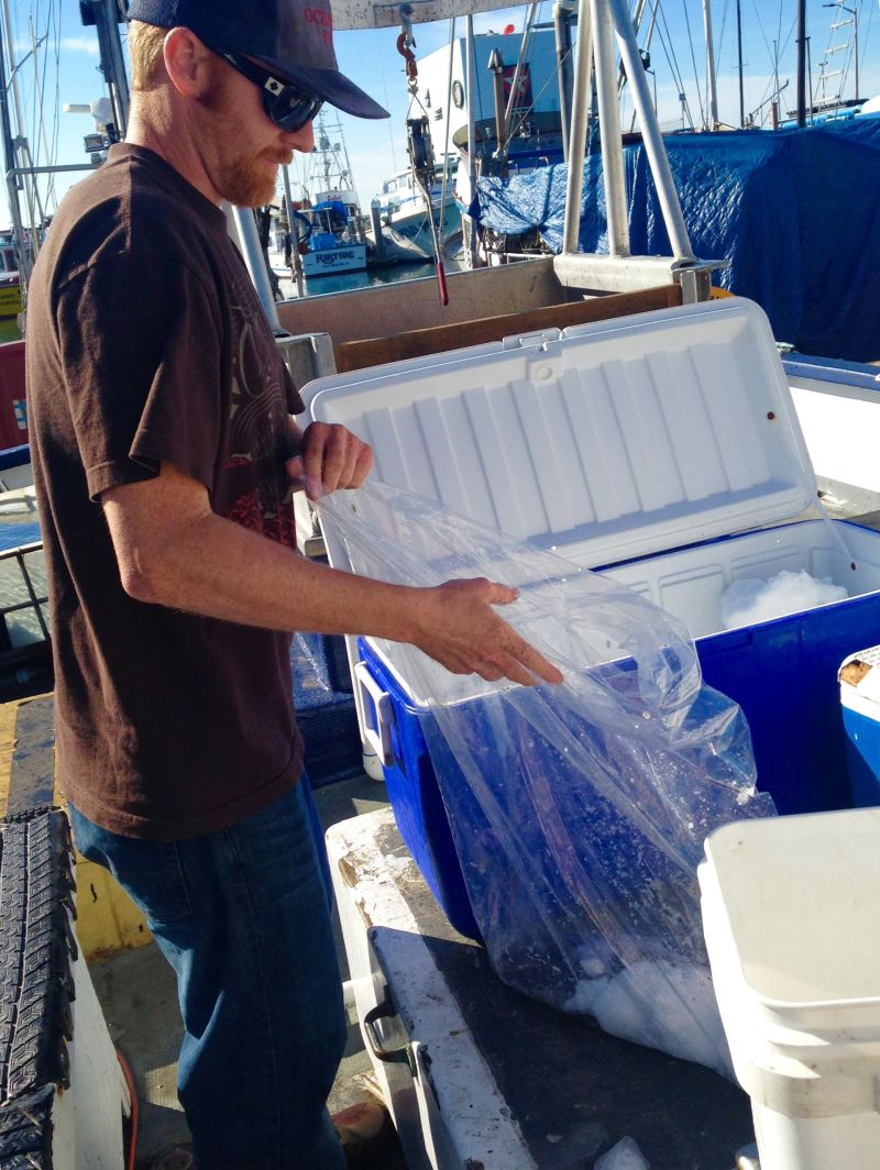 Don Marshall has been selling fish off his boat in Half Moon Bay to make ends meet. These fish only bring him 3 to 4 percent of what he usually makes on crab.