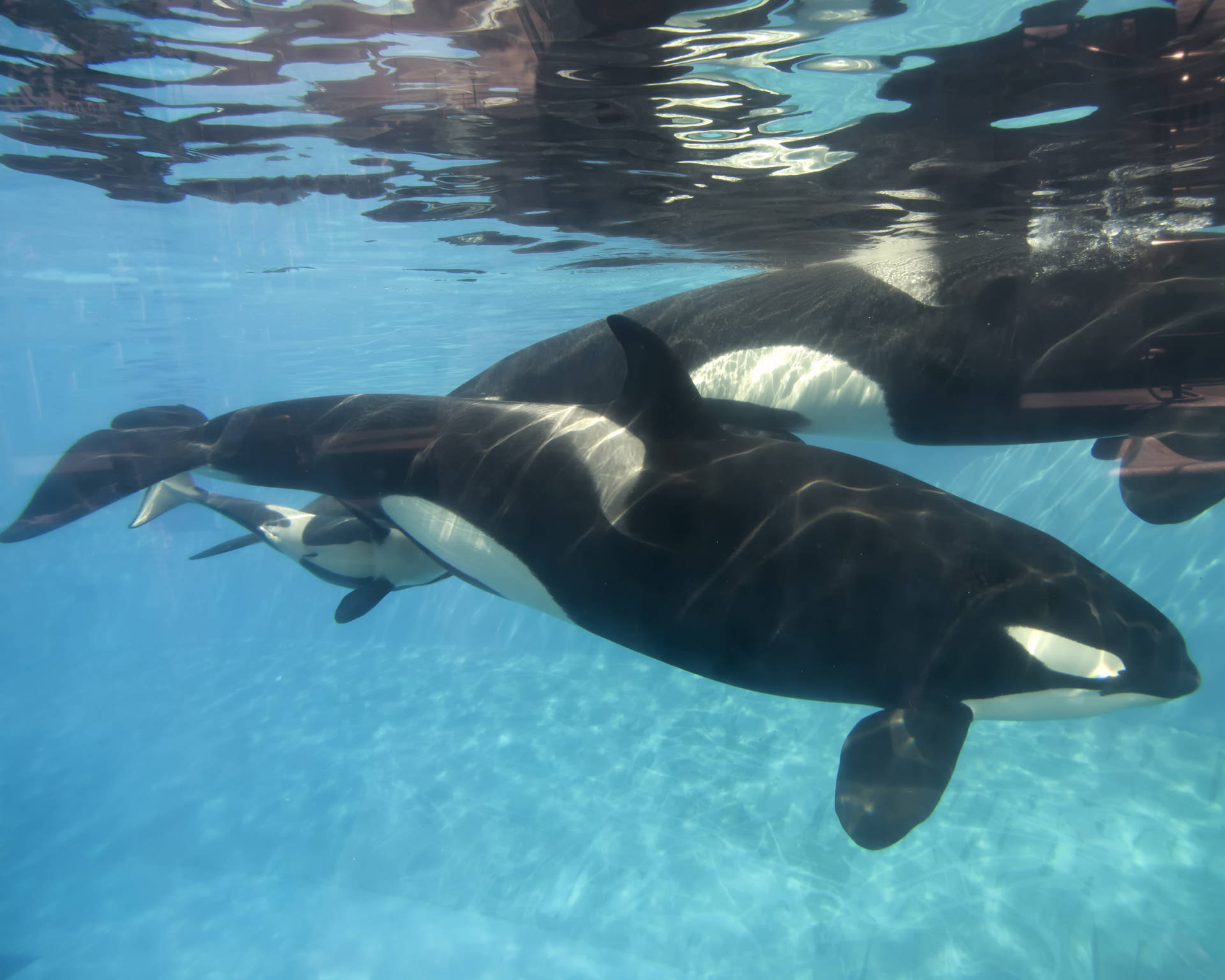 SeaWorld to Stop Breeding Orcas, End Whale Shows