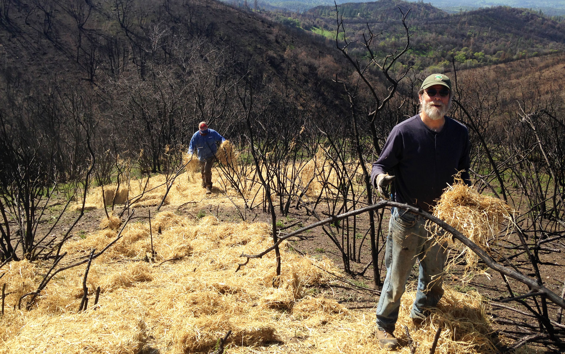 Michael Kriletich and other volunteers with CalaverasGROWN spread straw on scorched hills for erosion control.