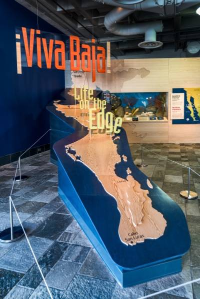 This huge map of Baja, a narrow peninsula in northwestern Mexico, helps orients visitors to the Monterey Bay Aquarium's newest exhibit.