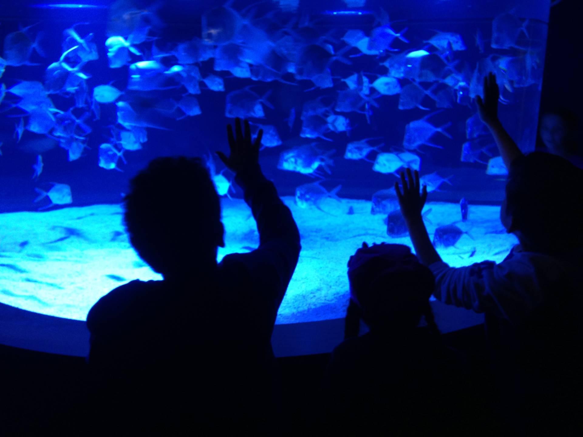 Monterey Bay Aquarium Takes a Deep Dive Into Baja California