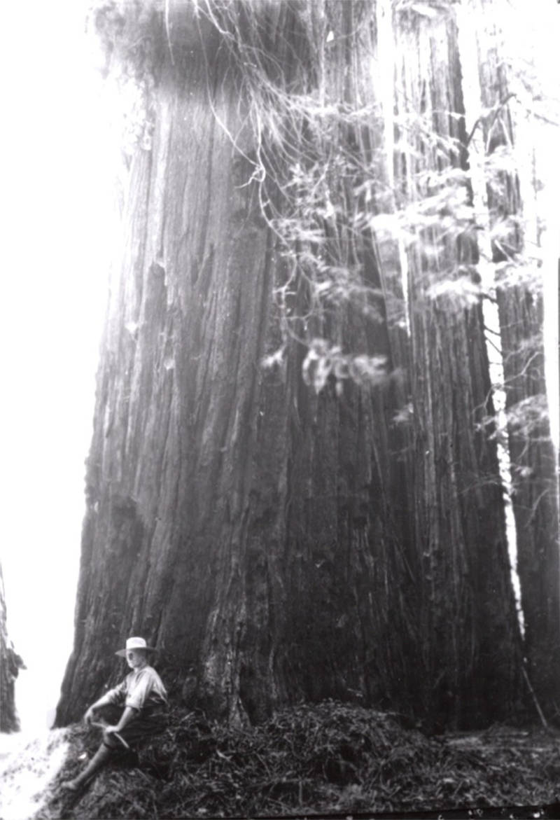 Charles Kellogg travelled around the country telling people about the mighty trees of California.
