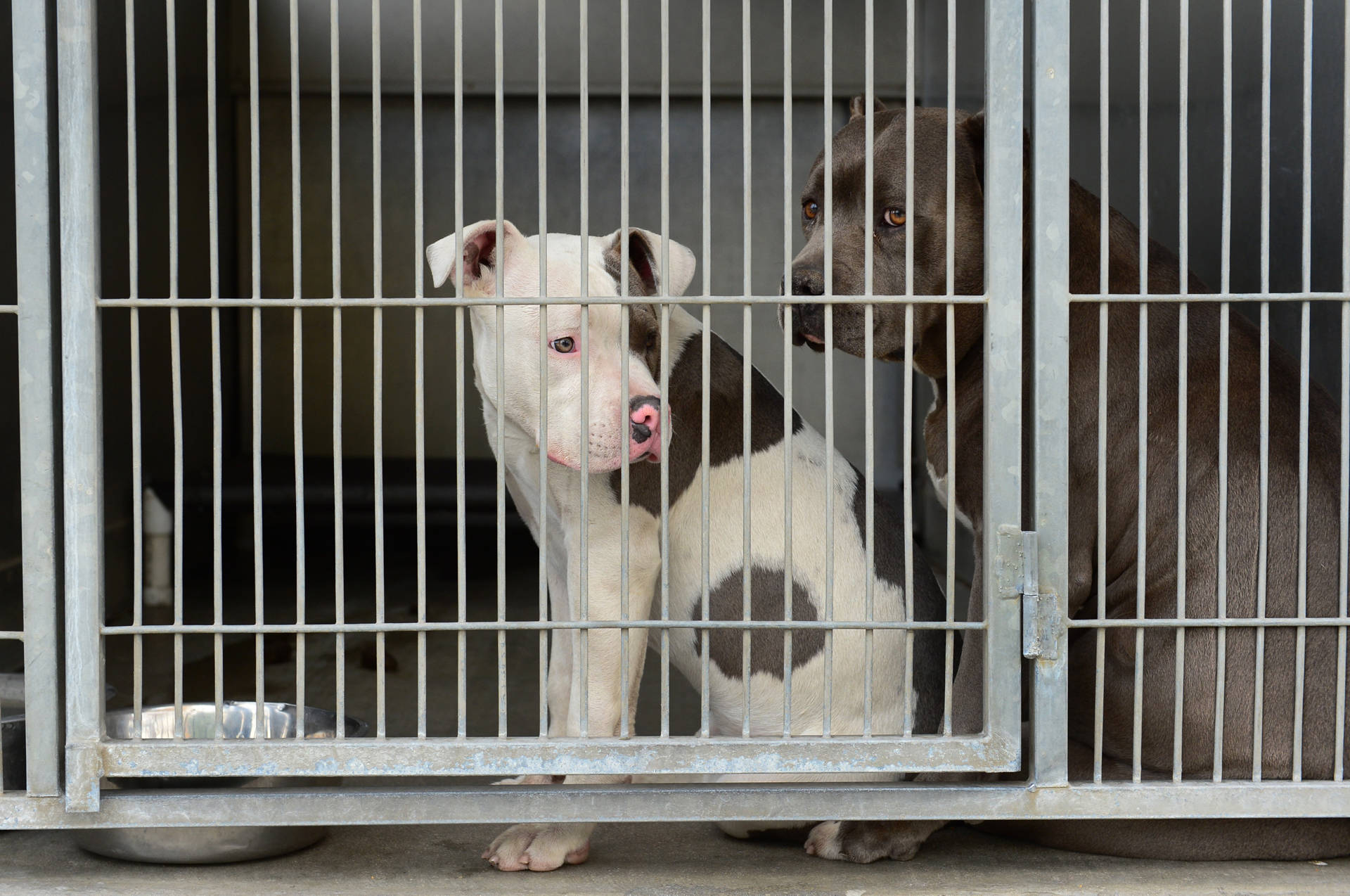 New California Law Gives 'Vicious' Dogs a Second Chance