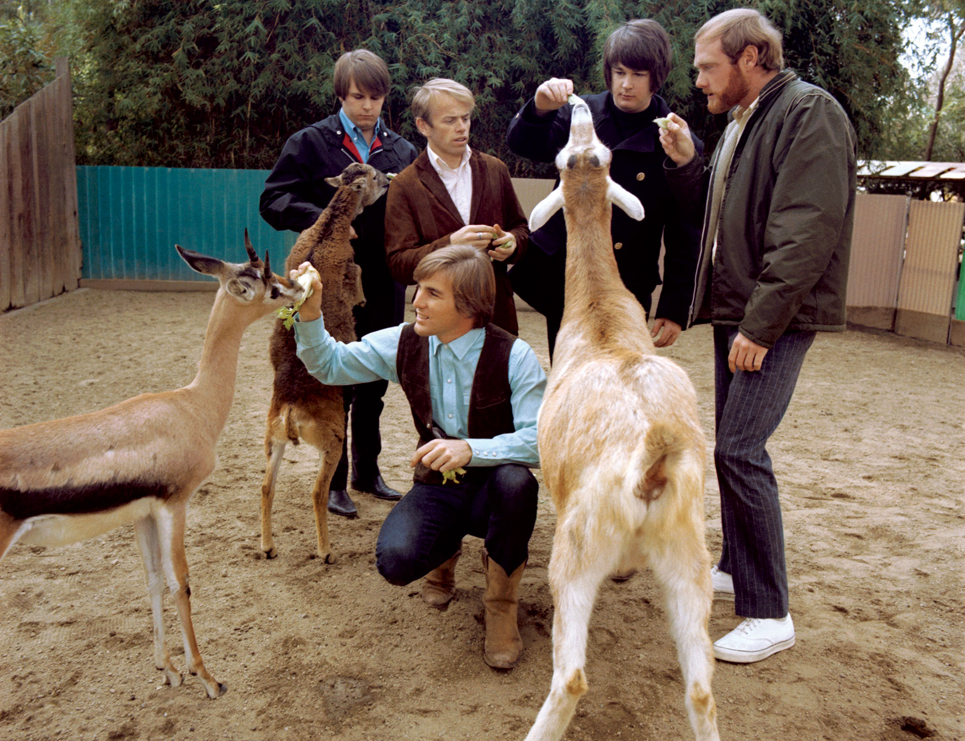 The Beach Boys at the San Diego Petting Zoo for the Pet Sounds cover shoot, 1966.