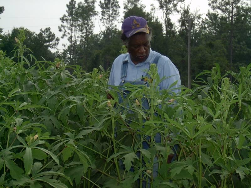 Ben Burkett on his Mississippi farm.