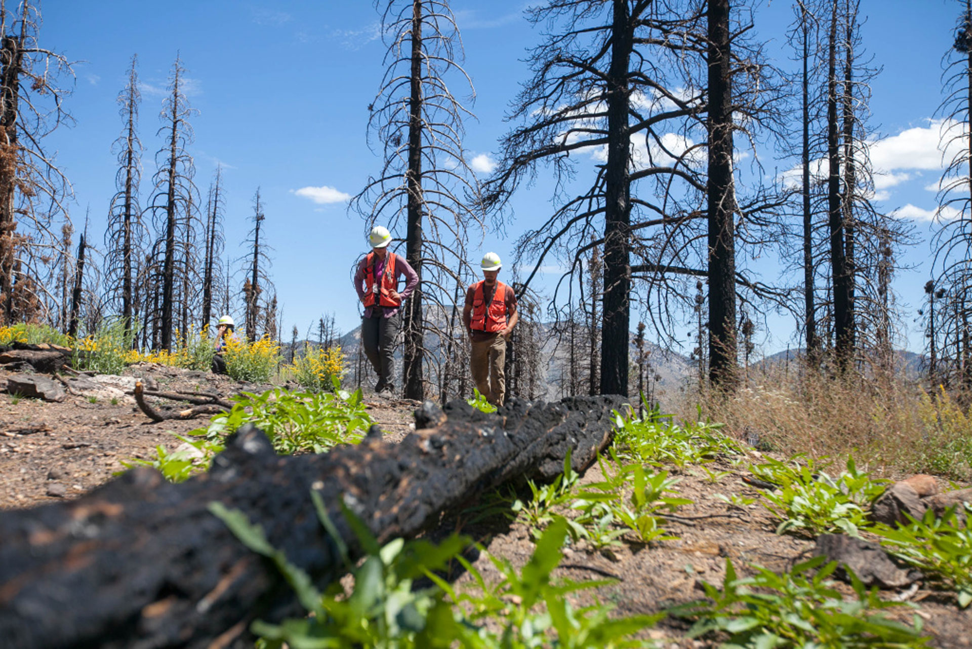 U.S. Forest Service crew members Paris Krause and Michael DeNicola walk along a high intensity burn area (mostly dead Jeffrey pines and White firs) one year after the Lake Fire in the San Bernardino National Forest on July 20, 2016.