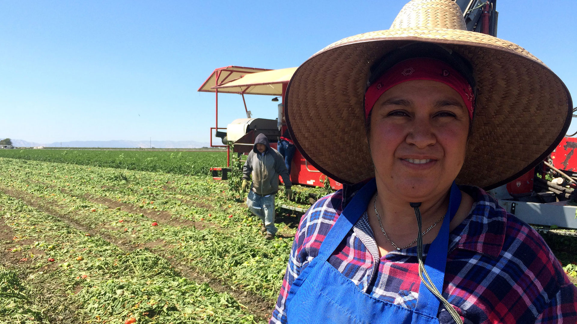 Farmworker Maria Diaz works in the pepper fields of Dixon.