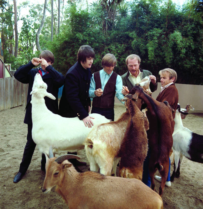Brian Wilson pets the goat that tormented Al Jardine, pictured far right.