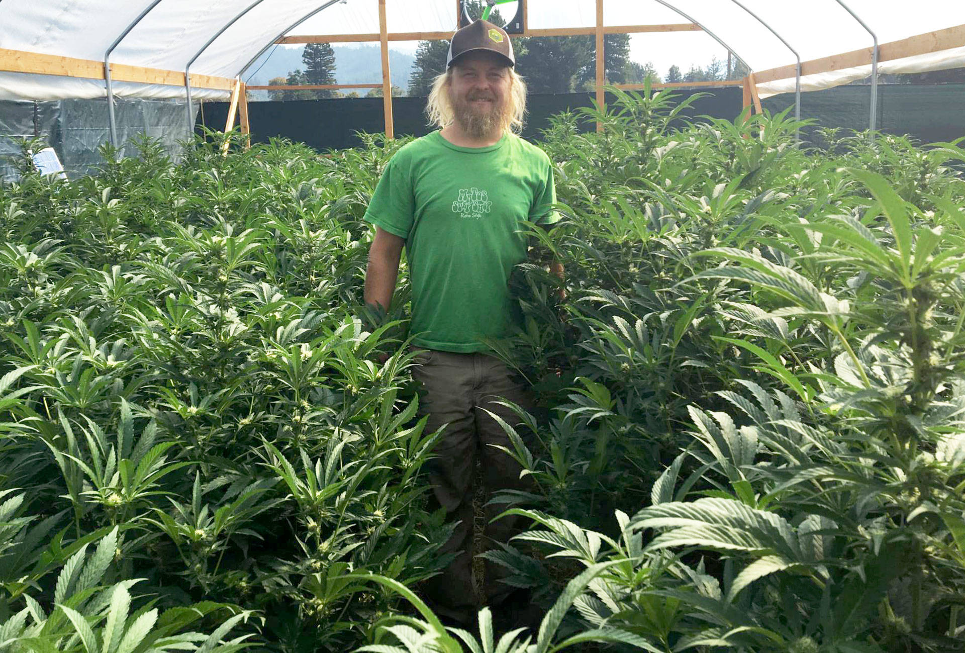 Small marijuana growers like Noah Beck in Humboldt County hope 'connoisseur cannabis' will help them compete with larger corporate growers.  Sam Harnett/KQED