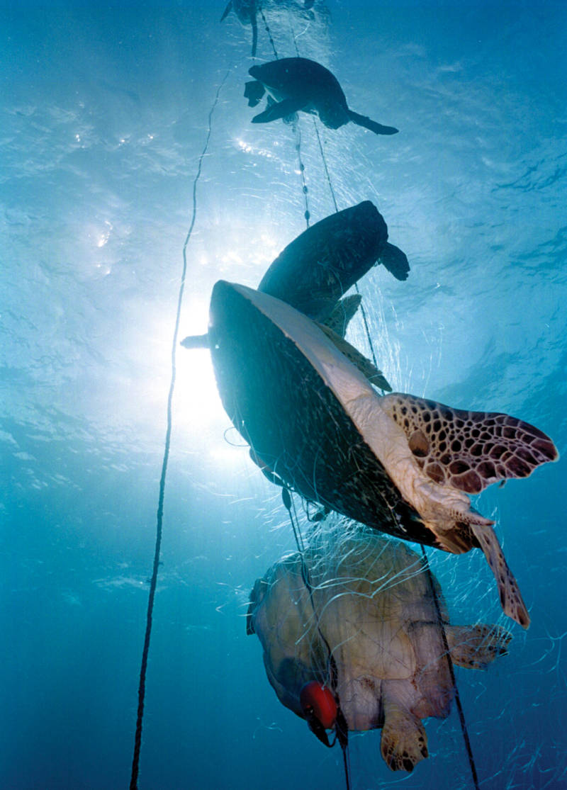 A ghost net, entangling 17 deceased sea turtles, was discovered days after a storm off the coast of Bahia, Brazil.