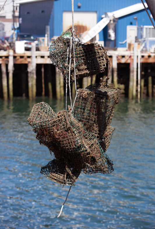 World Animal Protection and the Gulf of Maine Lobster Foundation, in partnership with local fishermen, removed ghost fishing gear off the coast of Portland, Maine.