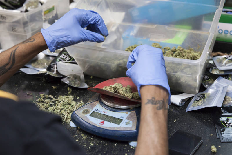 Cannabis buds are chosen and weighed by hand.