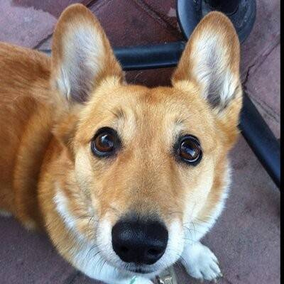 California First Dog Sutter Brown has cancer.