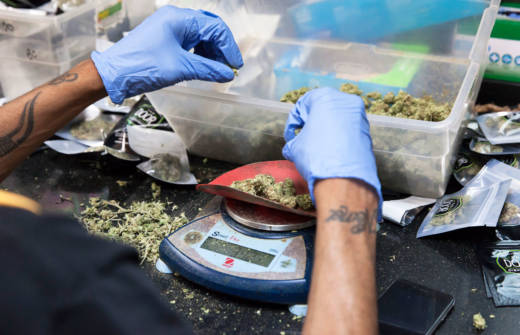 Cannabis buds are weighed out before being packaged up for sale at the Green Door Dispensary in San Francisco.