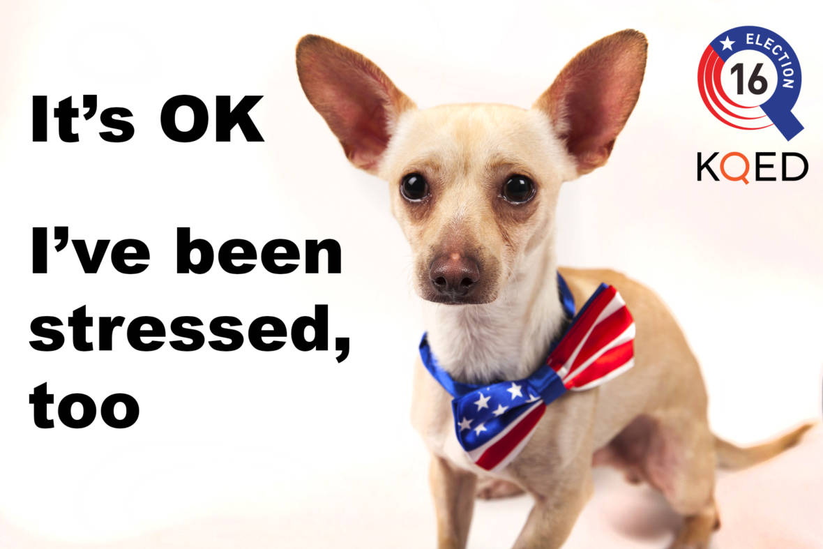 PHOTOS: Sick of the Election? These Shelter Animals Are Here For You
