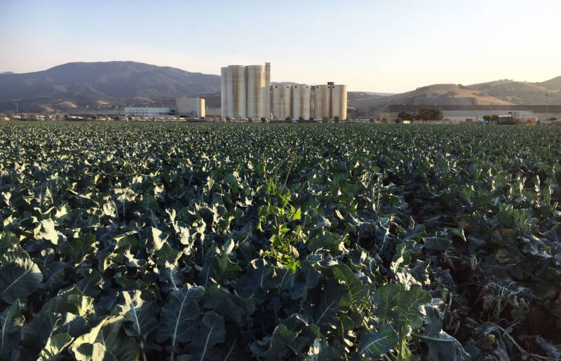 Broccoli fields now occupy land in front of the old Spreckels sugar factory site.