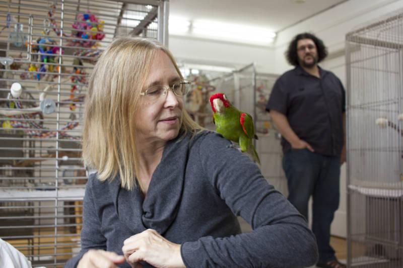 Chloe Redon and John Graziano run Mickaboo, a parrot rescue organization.