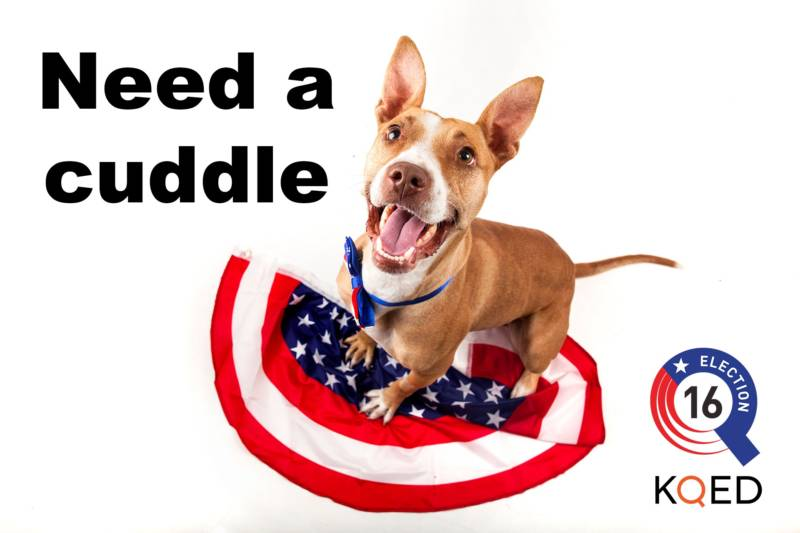 Animals Offer Election Relief