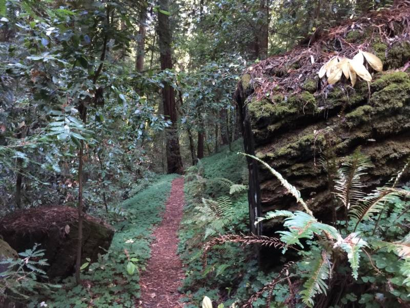 Portola Redwoods State Park. All state parks will be free to the public the day after Thanksgiving.