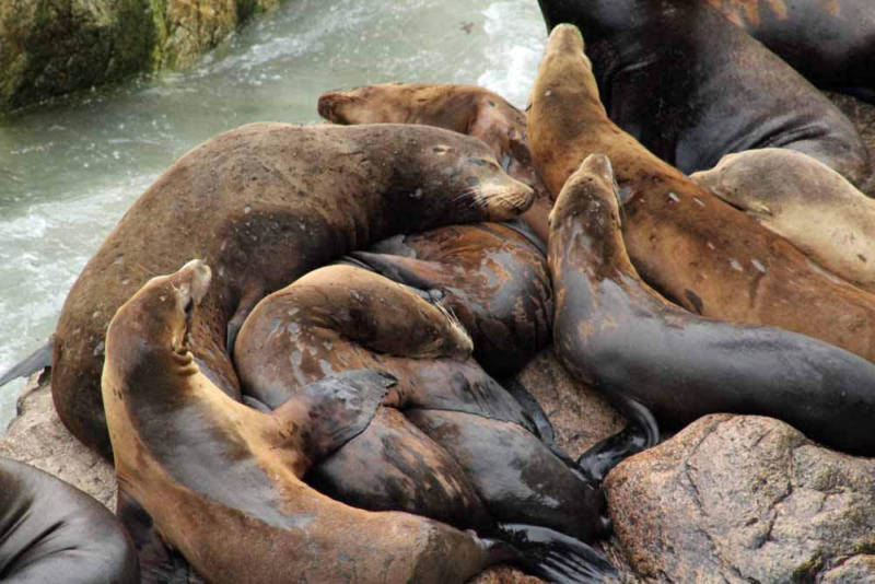 Wildlife on the Farallones -- a marine sanctuary outside San Francisco Bay -- are also suffering due to a lack of freshwater flowing from the Delta.