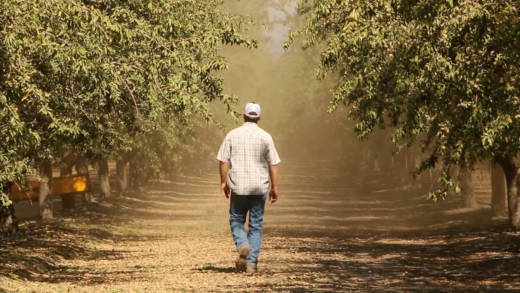 A grower walks through his almond orchard in Woodville during harvest season. The TPP could have meant $562 million in sales for California growers of fruits and nuts, the American Farm Bureau estimated.