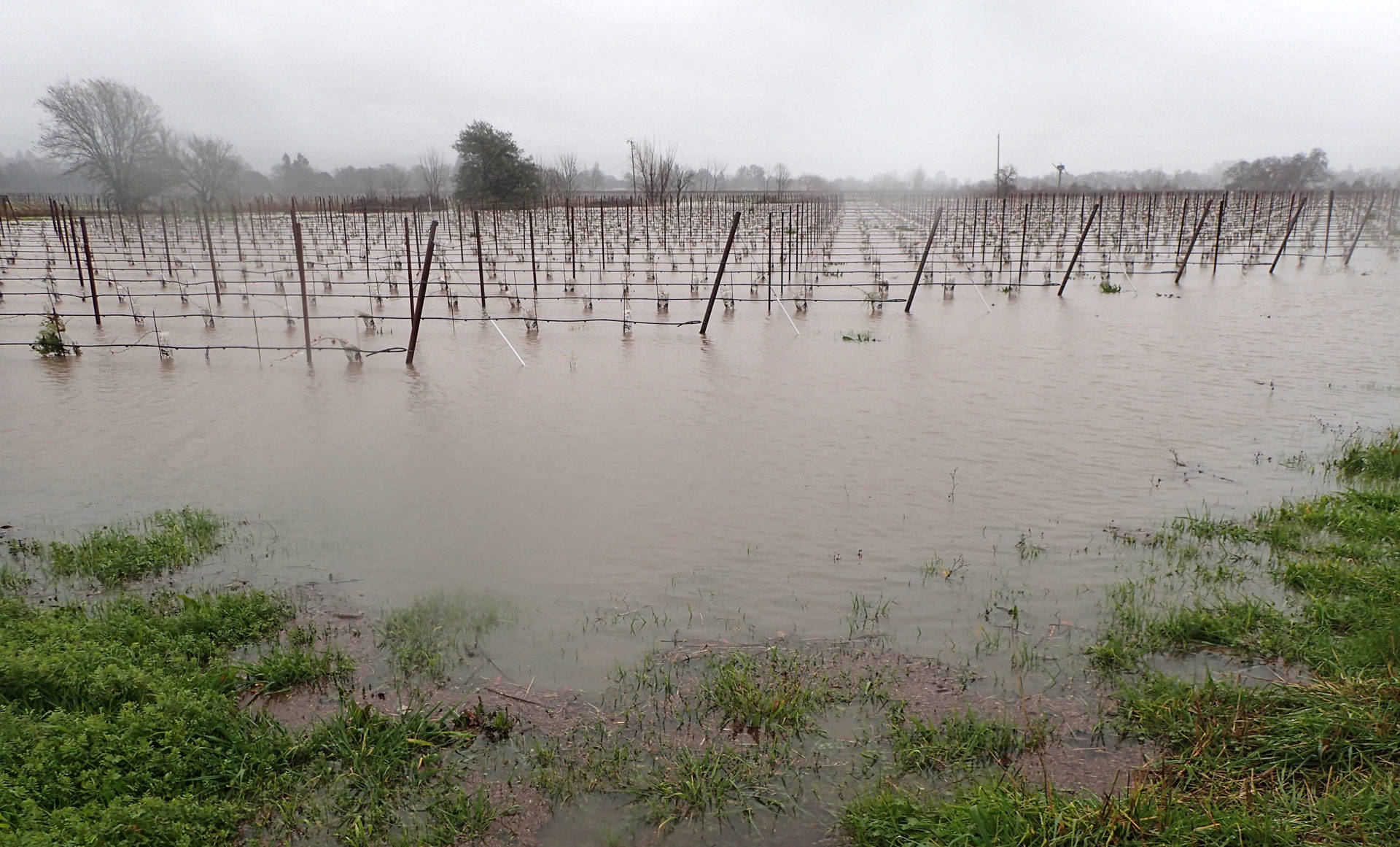 Flooded vineyards along Highway 29 in the Napa Valley after three days of rain, on Sunday, Jan. 8, 2017.  Craig Miller/KQED