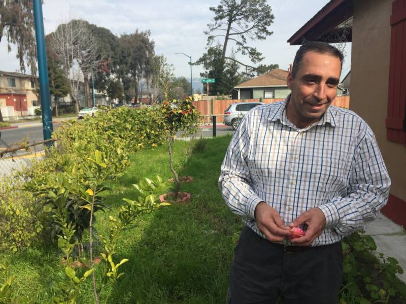 Mohammad Aref Rawoas shows off his garden in East Oakland. He stands among young figs, lemons, grapes, peas, and loquats. The small side yard pales in comparison to the nearly ten-acre farm the family had in Syria.