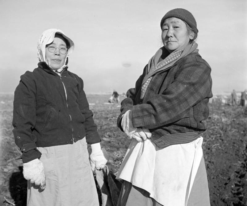Many of the Japanese-Americans incarcerated at Tule Lake had been farmers before the war. At camp, they were employed as field workers, often for just $12 a month.