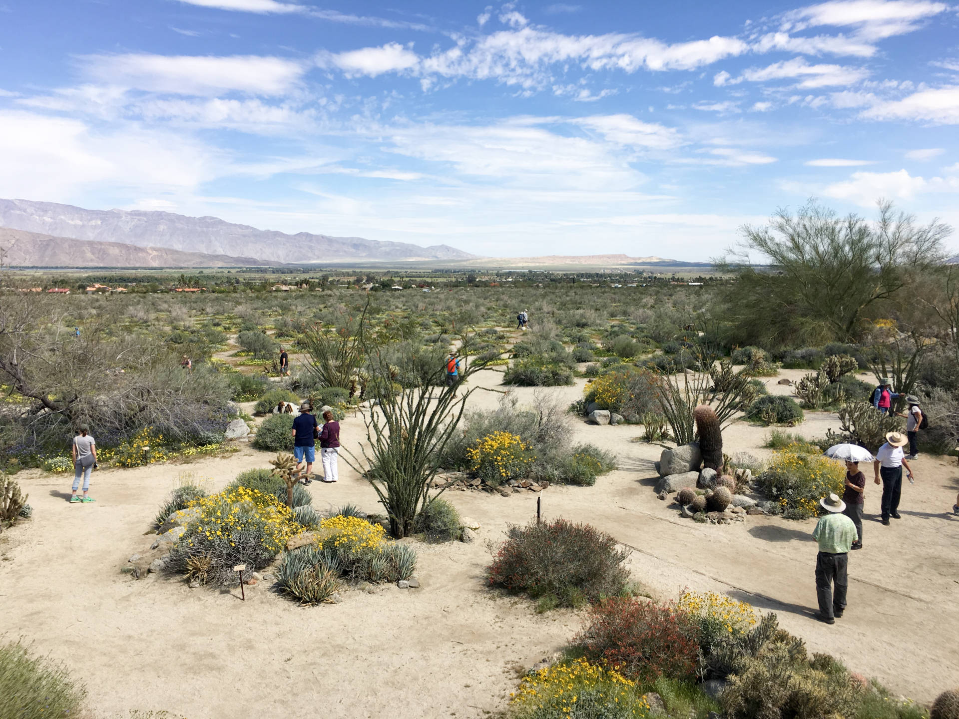 """People are scattered throughout the hills and valleys of Anza-Borrego, Califonia's largest state park, taking in the beauty of a rare """"super bloom"""" of wild flowers. NIna Gregory/NPR"""