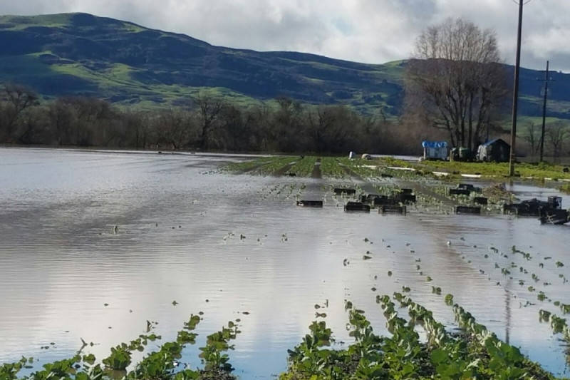 Winter Rains Bring Too Much of a Good Thing to Pajaro Riverbed Farm