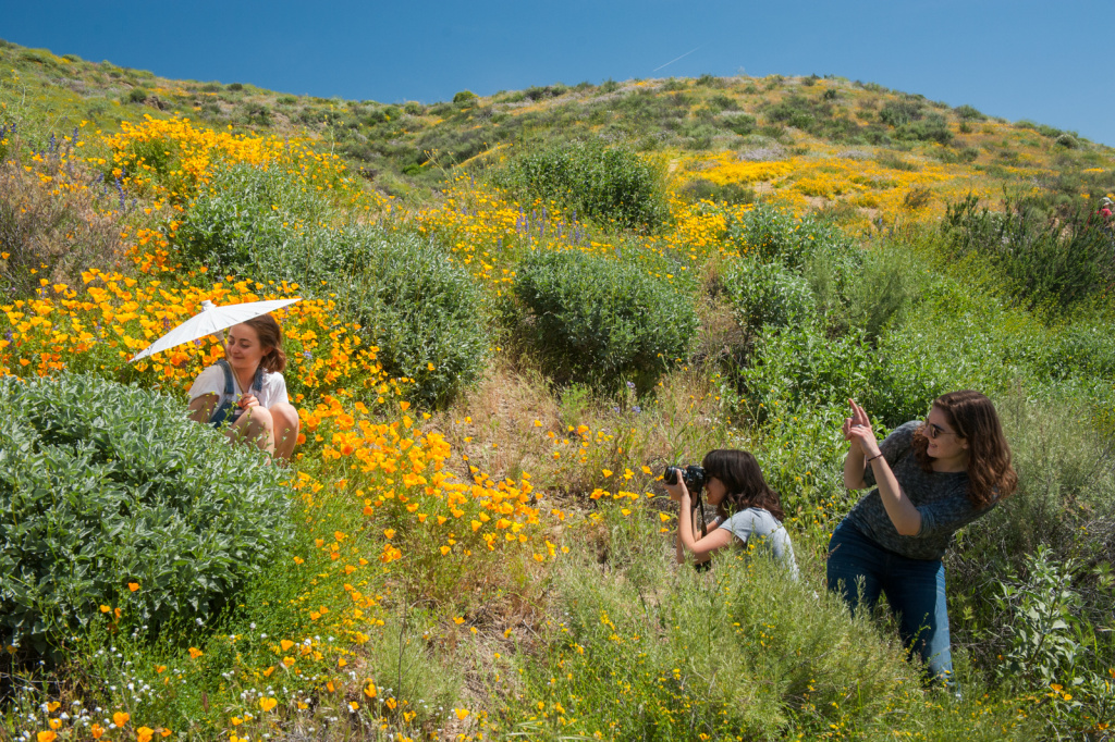 The Metropolitan Water District had to close the wildflower trail at Diamond Valley Lake in Hemet, California for several days to avoid damage to the area after thousands of people came during the superbloom this spring, many of them wandering off trail in pursuit of photographs, selfies, and a more intimate wildflower experience.