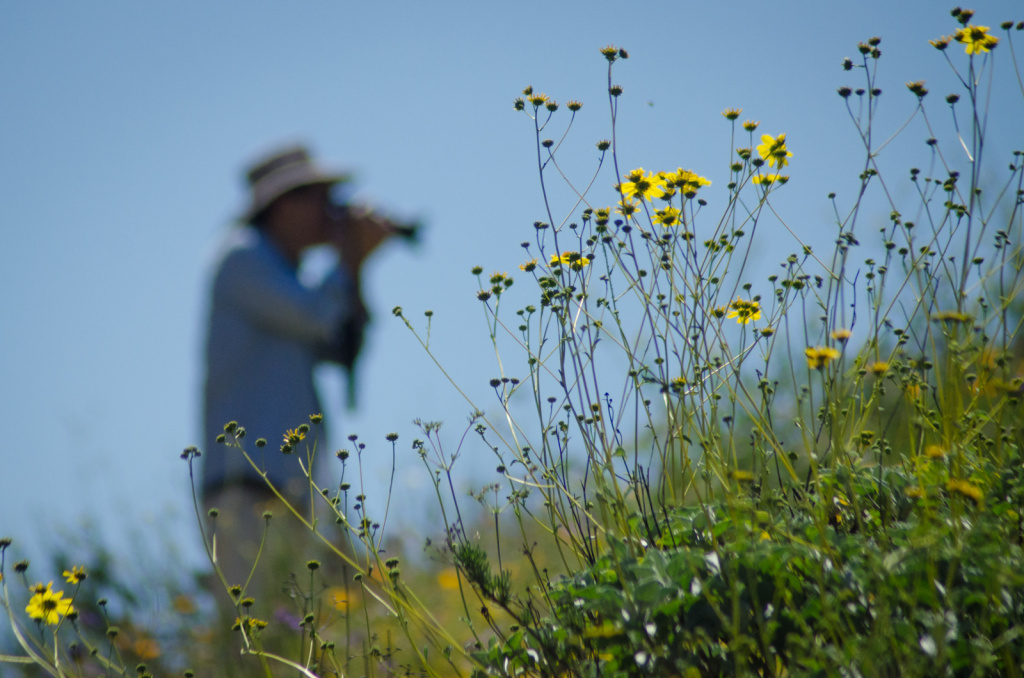 Wildflowers have been blooming around the state.