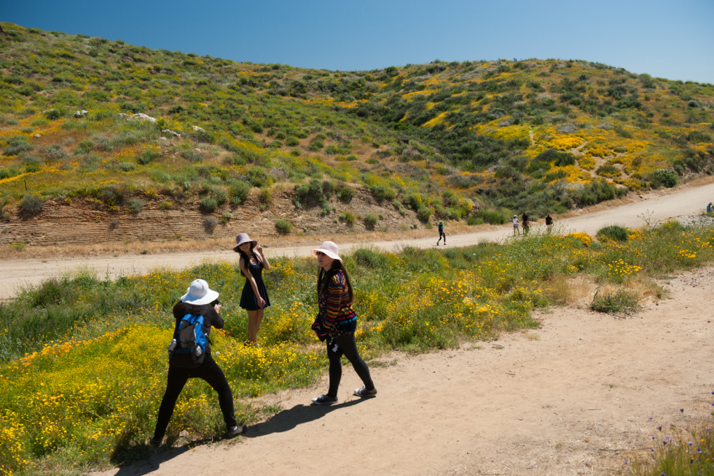 Thousands of visitors came to see the super bloom and take photos.