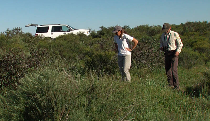 Biologists Susan Wynn and John Martin inspect coastal sage scrub on the San Diego National Wildlife Refuge to find a rare wild butterfly, March 14, 2017.