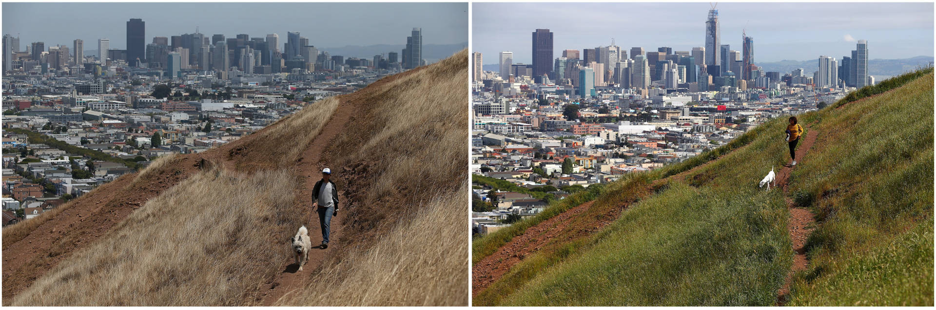A dog walker on a dried section of Bernal Heights Park in 2014 in San Francisco (left). When Sullivan returned to the hillside this year, he was able to snap a photo of a woman walking her dog in almost the exact same spot.