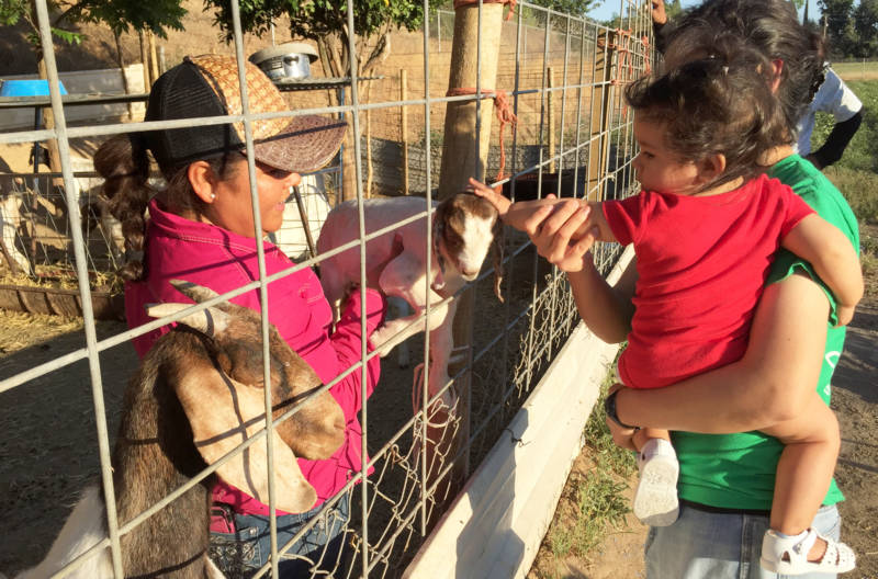 Ana Torres shows off a baby goat to her daughter Yuriana and granddaughter Victoria.