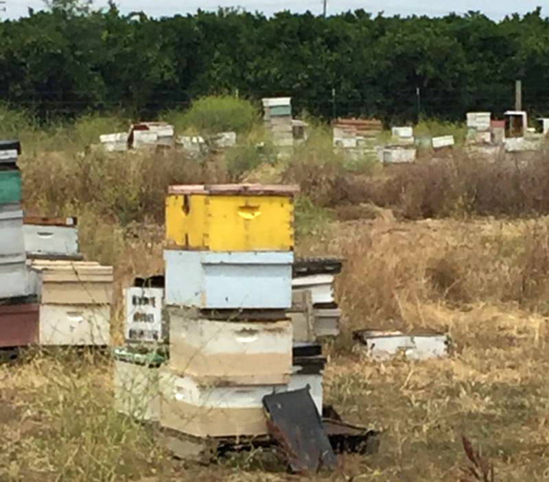Investigators discovered hives with a variety of distinctive markings, indicating they belonged to different owners.