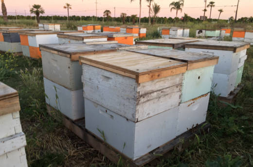 Fresno and Madera County law enforcement officials found $875,000 in stolen bees earlier this week.
