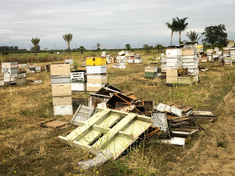 Earlier this year, California authorities uncovered this 'beehive chop-shop' in a field in Fresno County. A single bee is worth a fraction of a cent, but there can be as many as 65,000 bees in each hive.
